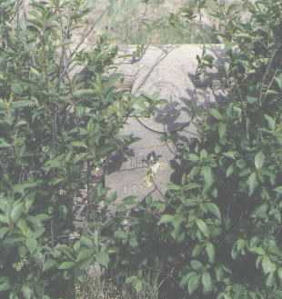 REED, JOHN A. - Colfax County, New Mexico | JOHN A. REED - New Mexico Gravestone Photos